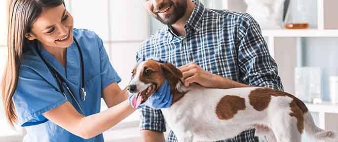 veterinario veterinaria veterinary traducción títulos penales Translation-Traducción
